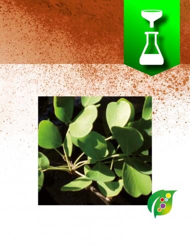 Brazilwood extract