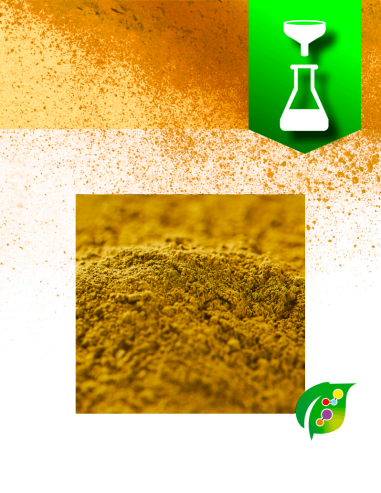 Yellow Fustic extract